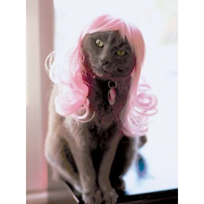 Pretty in pink. Yes, cats now need wigs to feel complete.